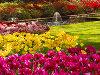 Выбираем маршрут: Нидерланды, Парк цветов Кёкенхоф